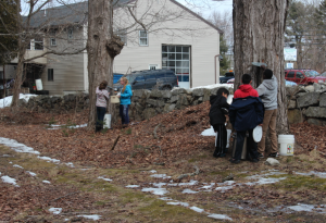 Group collecting maple sap