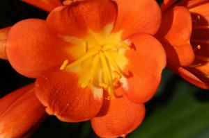 Flower at the National Botanic Garden