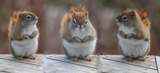 The Adorable Massachusetts Squirrel