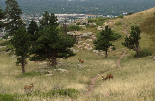 True learning -- running into 4 giant elk while hiking