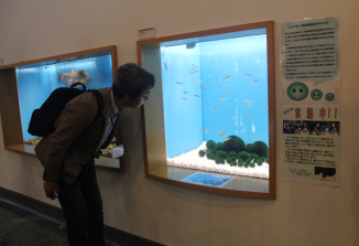 Mr. Yasumi checks out real Marimo Algae
