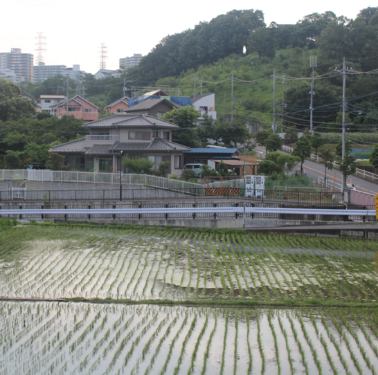 A nearby rice field