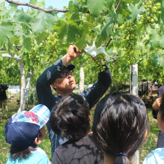 The community liaison teaches 3rd graders about how to protect the grapes from disease.