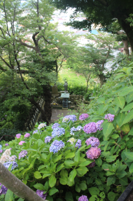 Hydrangeas at the Hasedera Temple