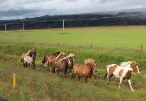 So many horses!