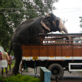 Elephant getting out of thetruck