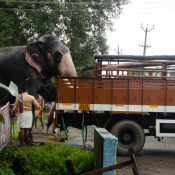 Elephant out of the truck