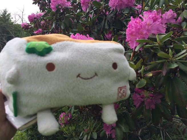 Tofu San smelling the Flowers