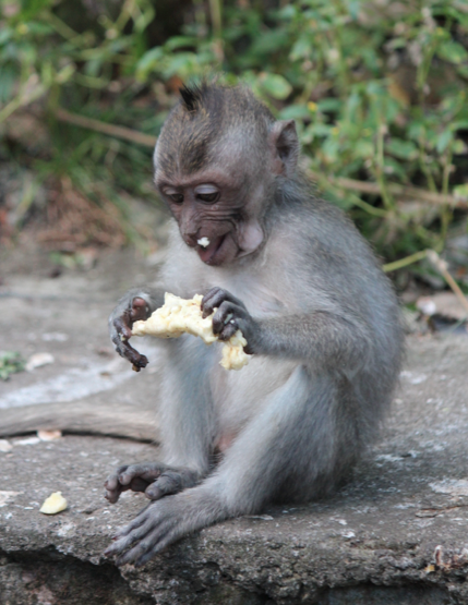 Mmmm… Banana