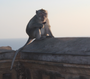 Monkey at Uluwatu