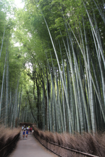 Bamboo Forest 1