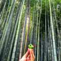 Loki at BambooForest