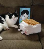 Cat Friend
