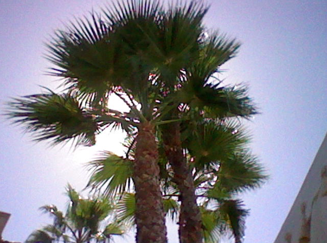 The palm trees that looked fake but aren't