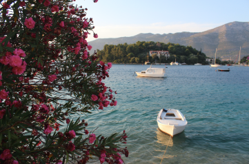 Pink Flowers and Sea