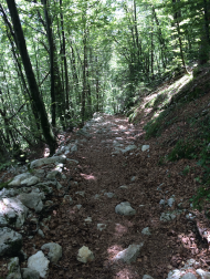 Real Trail