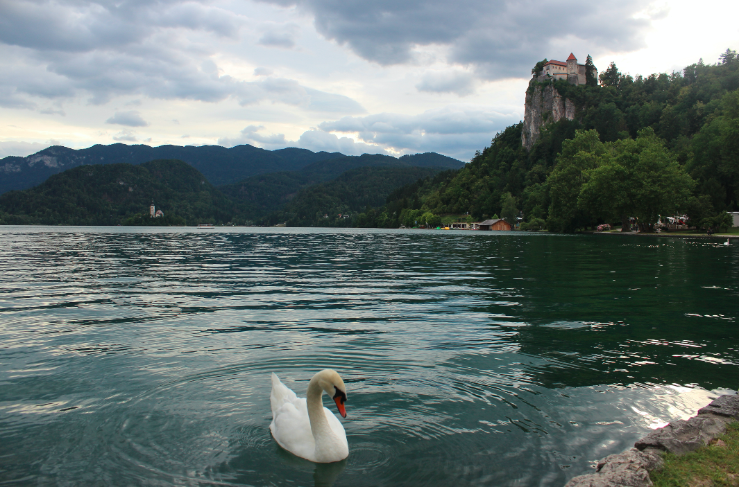 Swan and Castle