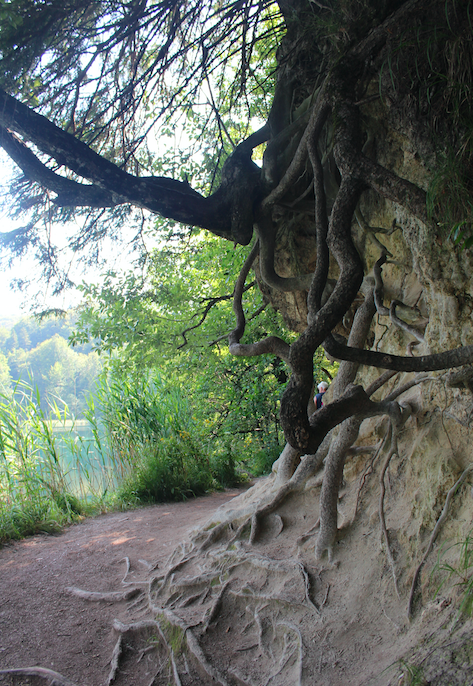 And more roots