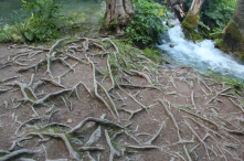 Even more roots