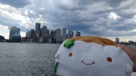 Tofu San and Boston