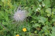 Lorax Flower