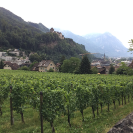 Grape Fields in Vaduz