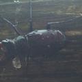 Vaduz Giant beetle