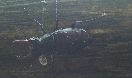 This beetle was GIANT, on the trail to the castle
