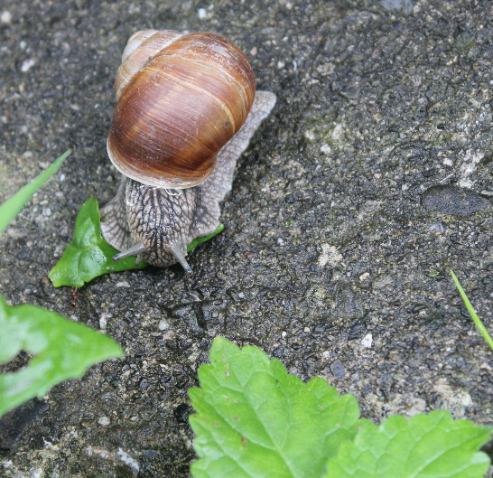 Snail, on the trail to the castle