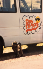 Baboon in front of Van
