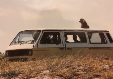 Baboon on Van