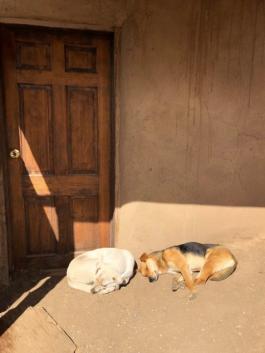 Dogs at Taos Pueblo