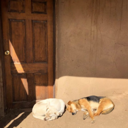 Dogs at Taos Pueblo