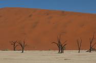 Dead trees 2