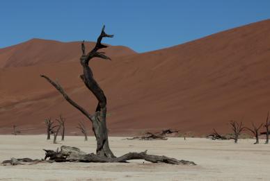 Dead trees 3