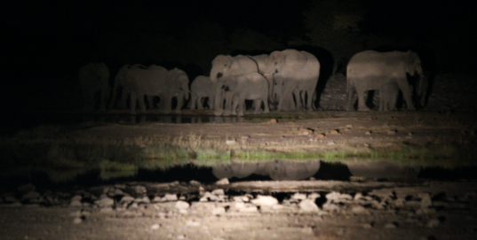Elephants at Night