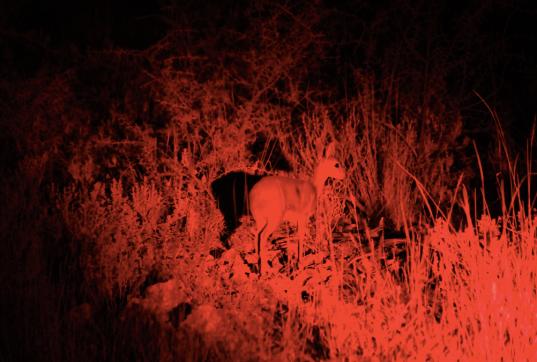 Steenbok.png