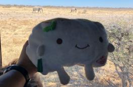 Tofu San and Elephants
