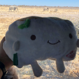 Tofu San and Elephants