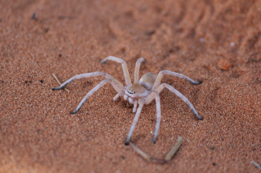 Trapdoor Spider.png