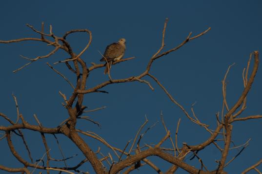Birdie in tree